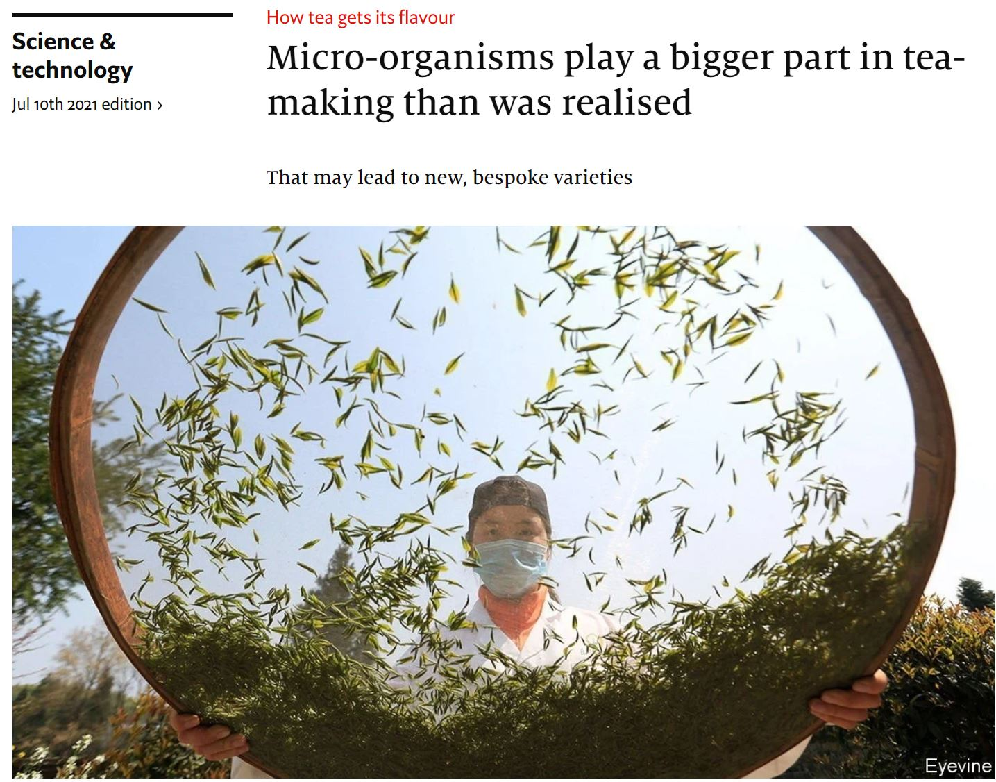 econ-2021-07-10-Micro-organisms play a bigger part in tea-making than was realised